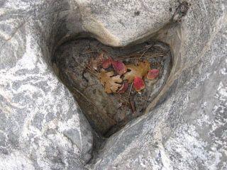 Heartinrock