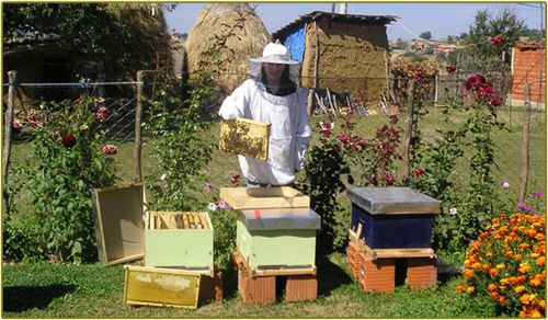Kosovo_beekeeper