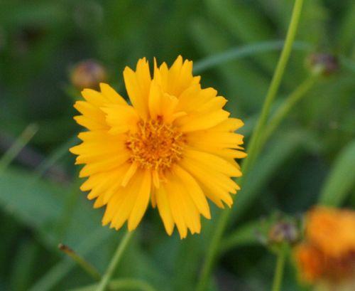 Solsticeflower