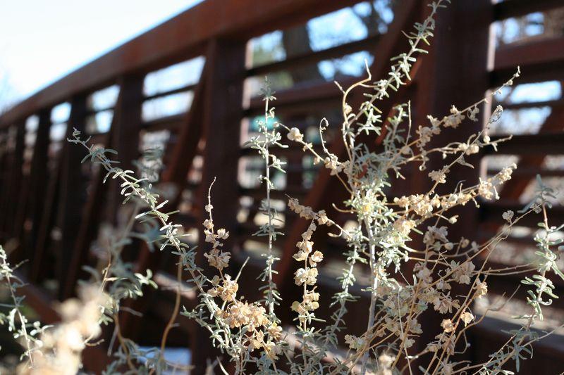 Flowerbridge