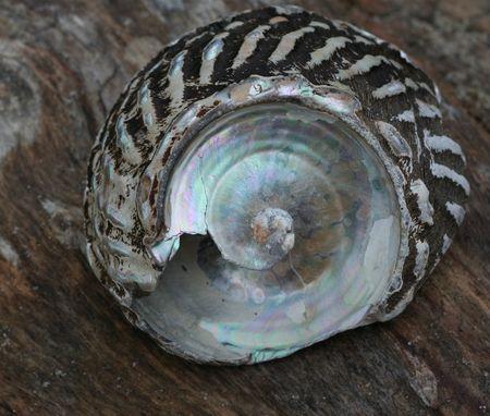 Shells3