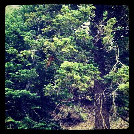 Trees_abel