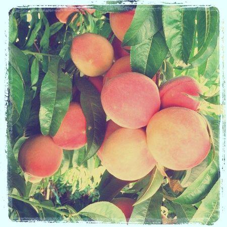 Peaches (2)