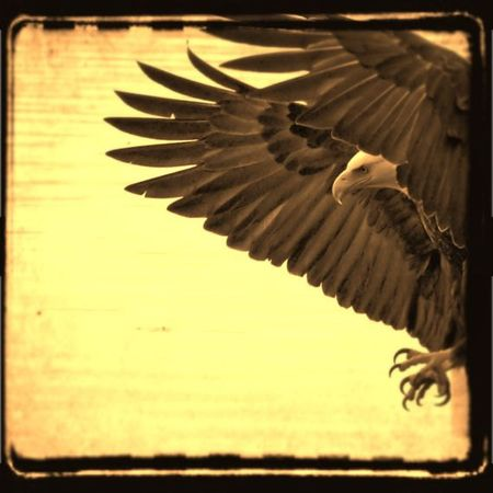 Eagle_Elinay