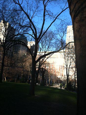 Newyorkmadisonpark