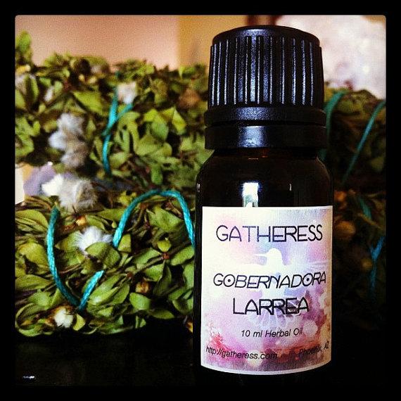 Larrea_gatheress