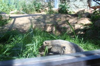 Tortoisecalm_1_1