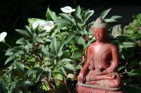 Buddhacalla_1_1